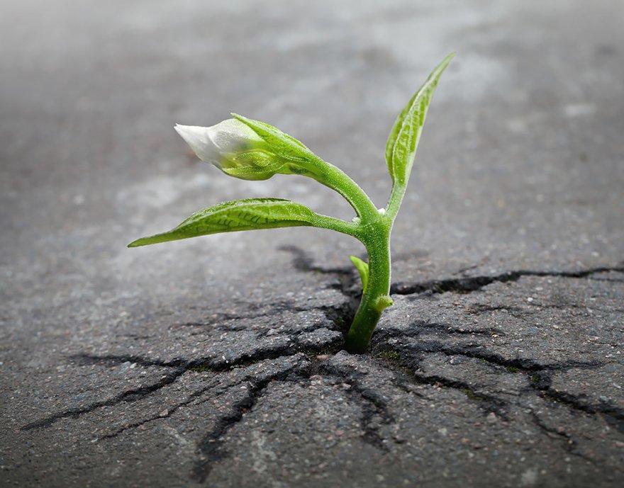 Az élet utat tör magának – krónika